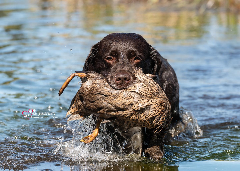 MSGDA NAHRA Test - by Alaska Dog Photographer