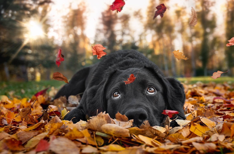 The Journey Photography By Cris Alaska Dog Photographer