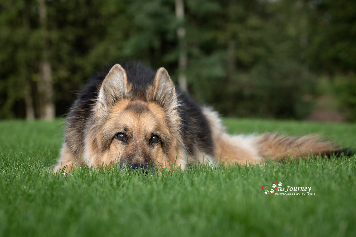 Tribute to MacKenzie - by Alaska Pet Photographer
