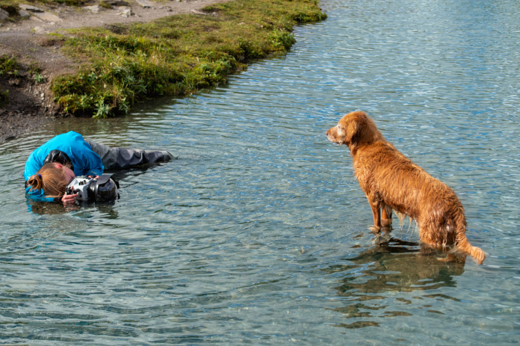 female professional pet photographer laying in the river to take a dog's photograph